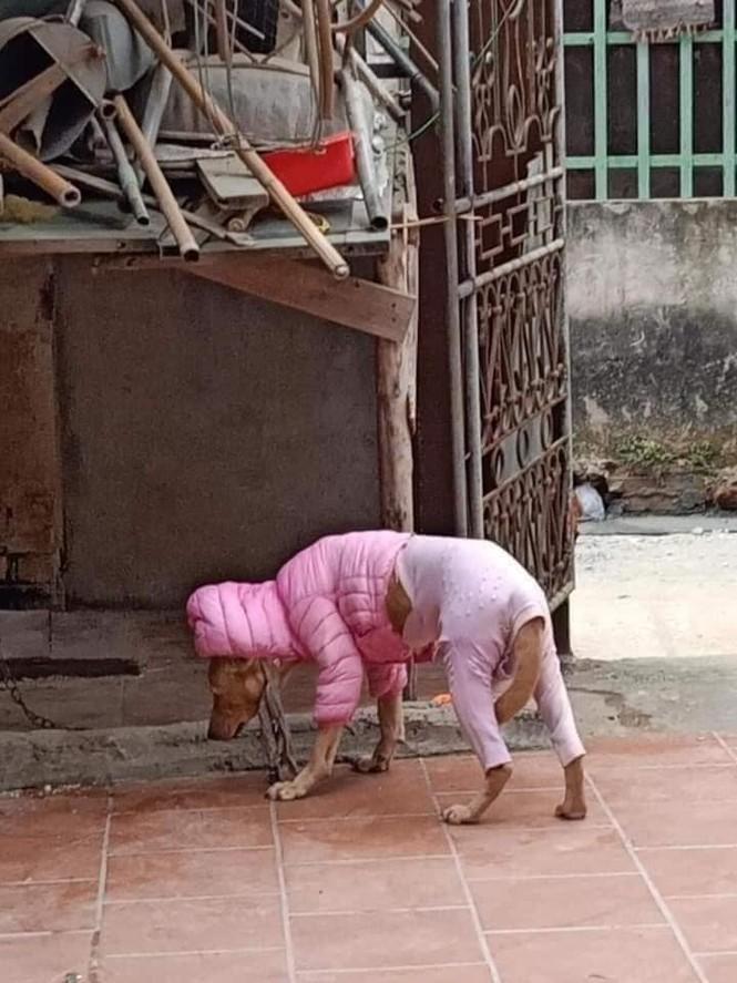 Thời trang của hội thú cưng trong thời tiết rét đậm: Khi