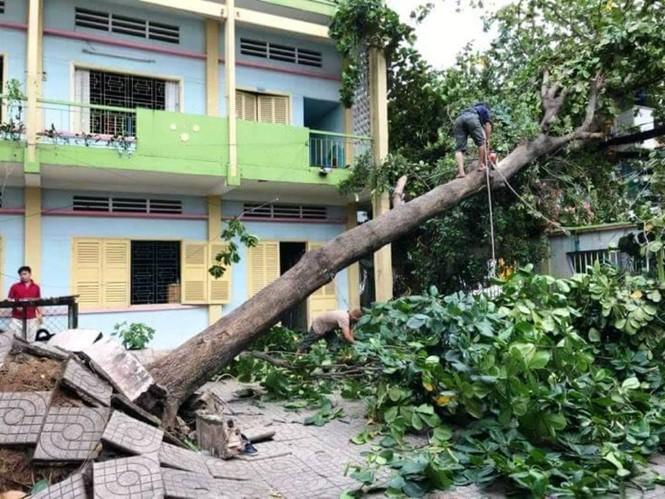 Giông lốc làm cây ngã khắp Sài Gòn, đè bẹp ô tô, lốc mái nhà dân - ảnh 1