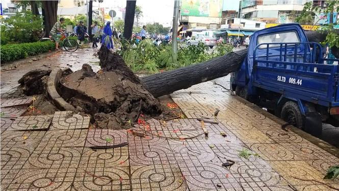 Giông lốc làm cây ngã khắp Sài Gòn, đè bẹp ô tô, lốc mái nhà dân - ảnh 2