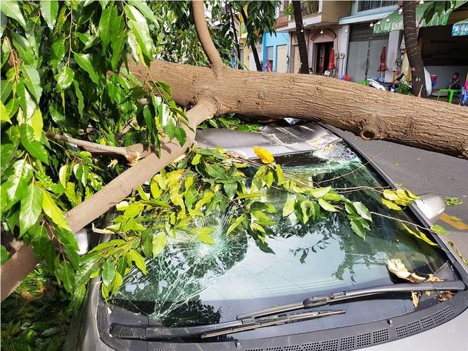 Giông lốc làm cây ngã khắp Sài Gòn, đè bẹp ô tô, lốc mái nhà dân - ảnh 4