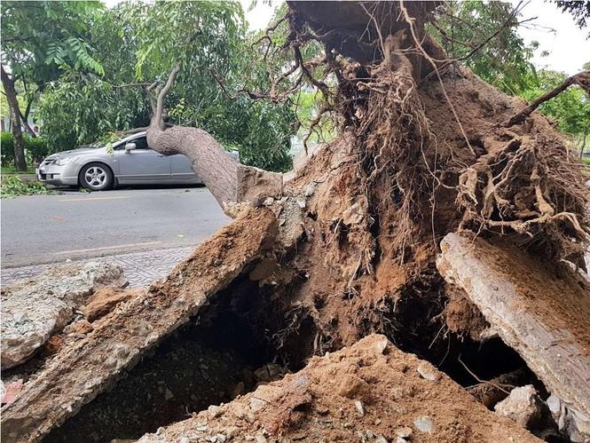 Giông lốc làm cây ngã khắp Sài Gòn, đè bẹp ô tô, lốc mái nhà dân - ảnh 5