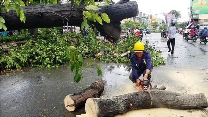 Giông lốc làm cây ngã khắp Sài Gòn, đè bẹp ô tô, lốc mái nhà dân - ảnh 11