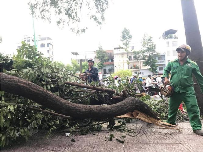 Giông lốc làm cây ngã khắp Sài Gòn, đè bẹp ô tô, lốc mái nhà dân - ảnh 6