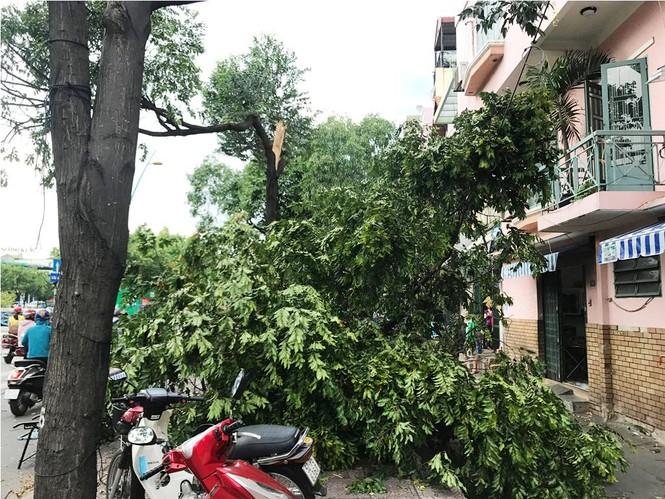 Giông lốc làm cây ngã khắp Sài Gòn, đè bẹp ô tô, lốc mái nhà dân - ảnh 7