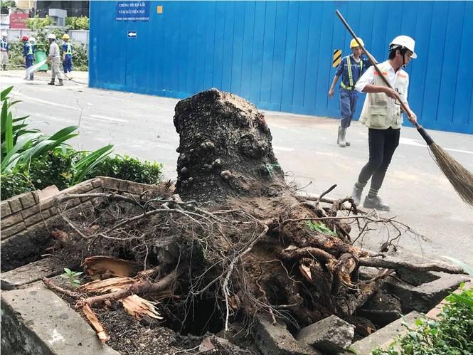 Giông lốc làm cây ngã khắp Sài Gòn, đè bẹp ô tô, lốc mái nhà dân - ảnh 8
