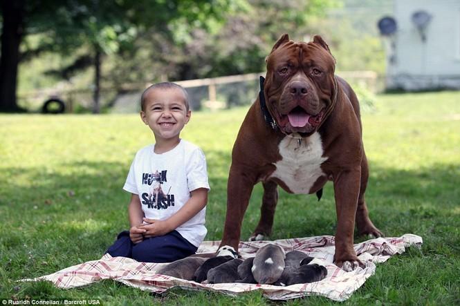 Choáng váng với đàn chó pitbull con giá 10 tỉ đồng - ảnh 6