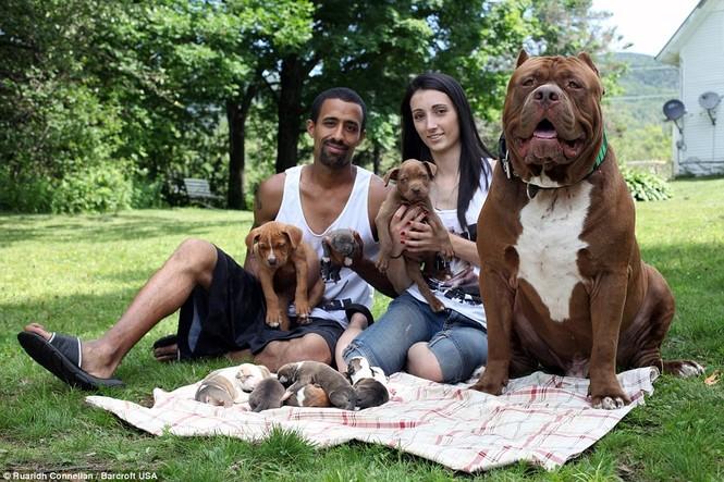 Choáng váng với đàn chó pitbull con giá 10 tỉ đồng - ảnh 4
