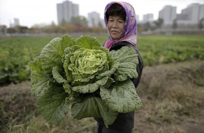 Nhìn gần cuộc sống đời thường ở Triều Tiên - ảnh 1