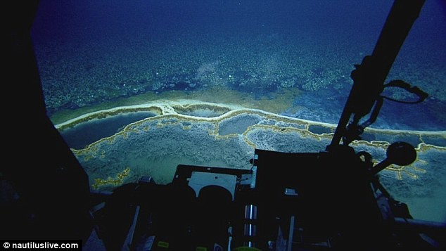 Phát hiện hồ nước 'tử thần' siêu mặn dưới đáy sâu vịnh Mexico - ảnh 4