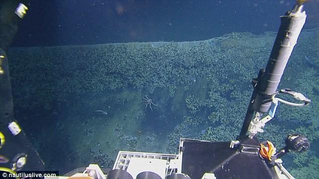 Phát hiện hồ nước 'tử thần' siêu mặn dưới đáy sâu vịnh Mexico - ảnh 3