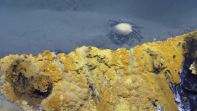Phát hiện hồ nước 'tử thần' siêu mặn dưới đáy sâu vịnh Mexico - ảnh 5