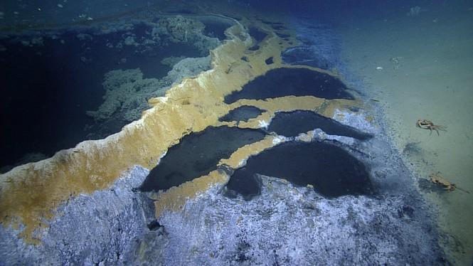 Phát hiện hồ nước 'tử thần' siêu mặn dưới đáy sâu vịnh Mexico - ảnh 2