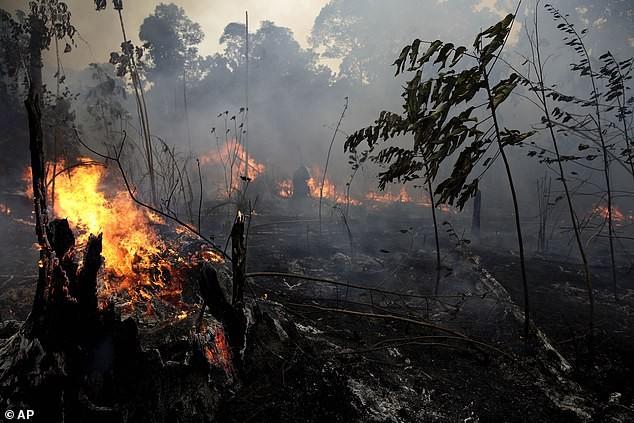 Brazil chỉ nhận trợ cấp chữa cháy rừng nếu Tổng thống Pháp rút lại lời xúc phạm - ảnh 1