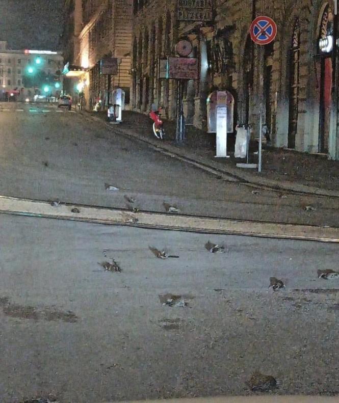 Ý: Cư dân hoảng hốt vì 'cơn mưa' xác chim trong đêm giao thừa - ảnh 3