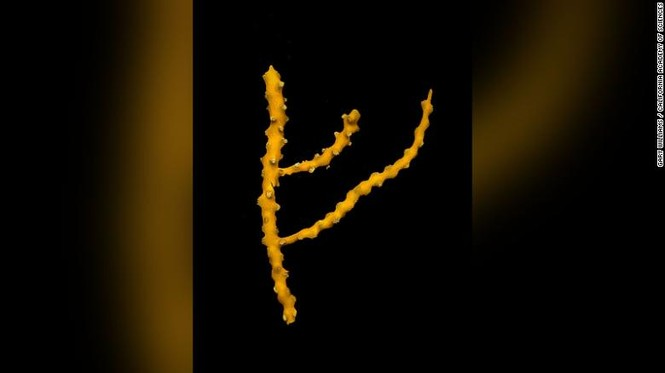 động thực vật mới phát hiện năm 2019 các nhà nghiên cứu - ảnh 6
