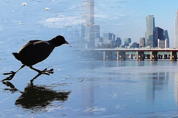 """Hàn Quốc lạnh đến mức sông Hàn hóa """"sân băng"""" khổng lồ, đến biển cũng đóng băng - ảnh 5"""
