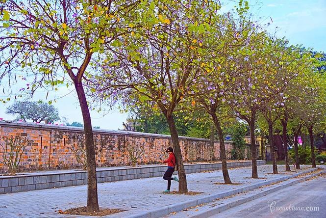 Hà Nội phố: Chiêm ngưỡng con đường hoa ban đẹp đến nao lòng giữa Thủ Đô đầu Xuân mới - ảnh 7