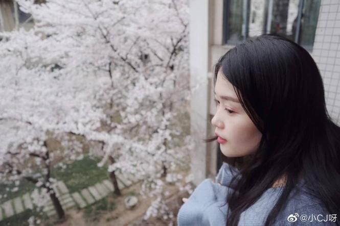 """Xôn xao trước """"lớp học hoa anh đào"""" tại trường Đại học Đông Nam, Trung Quốc - ảnh 6"""