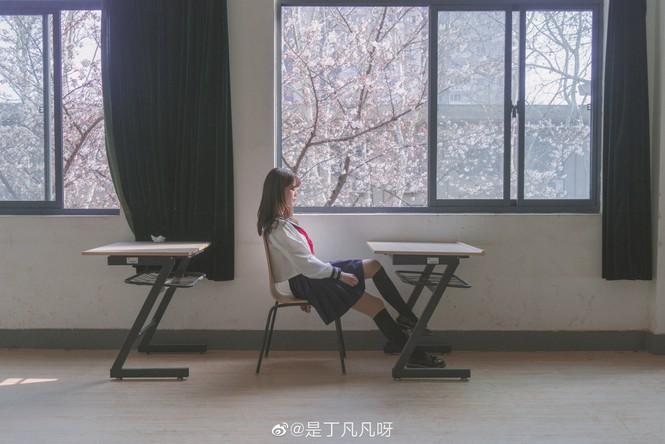 """Xôn xao trước """"lớp học hoa anh đào"""" tại trường Đại học Đông Nam, Trung Quốc - ảnh 7"""