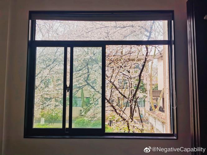 """Xôn xao trước """"lớp học hoa anh đào"""" tại trường Đại học Đông Nam, Trung Quốc - ảnh 10"""