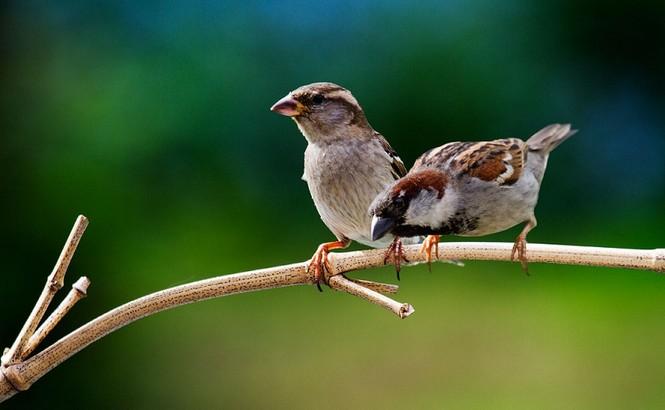 Bạn đọc sáng tác: Tôi cứu một chú chim sẻ nhỏ, xây đắp êm đềm kỷ niệm tuổi thơ - ảnh 1