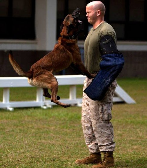 Những điều ít biết về cách quân đội Mỹ huấn luyện chó chiến đấu - ảnh 4