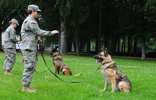 Những điều ít biết về cách quân đội Mỹ huấn luyện chó chiến đấu - ảnh 3