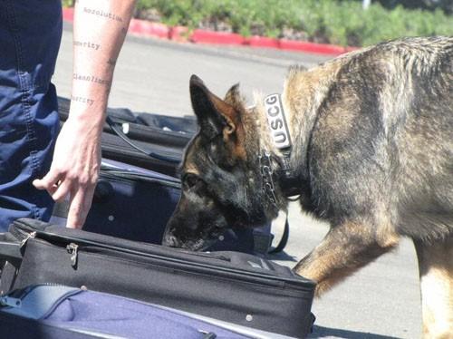 Những điều ít biết về cách quân đội Mỹ huấn luyện chó chiến đấu - ảnh 6