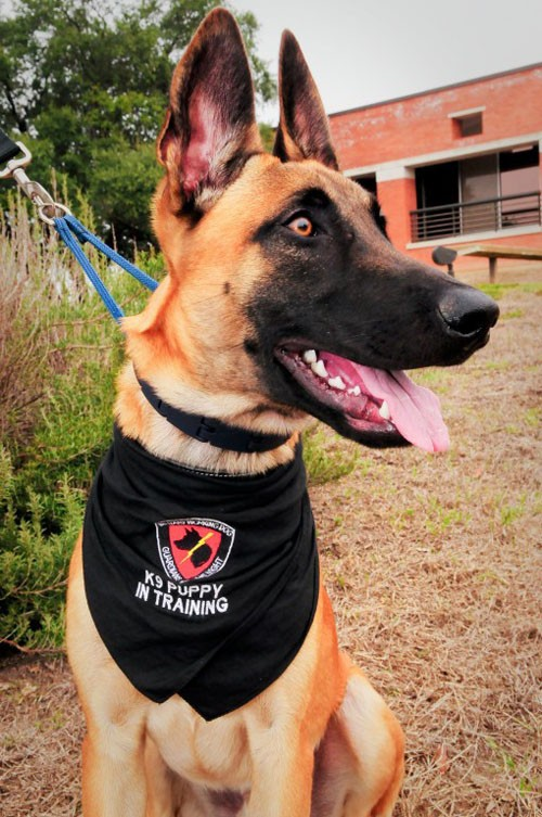 Những điều ít biết về cách quân đội Mỹ huấn luyện chó chiến đấu - ảnh 1
