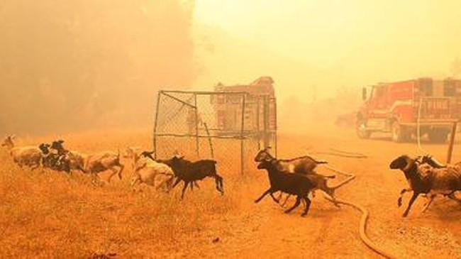 Cháy rừng khủng khiếp ở Mỹ, 13 người thương vong - ảnh 3