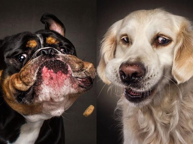 Ảnh đẹp của cún cưng - ảnh 1