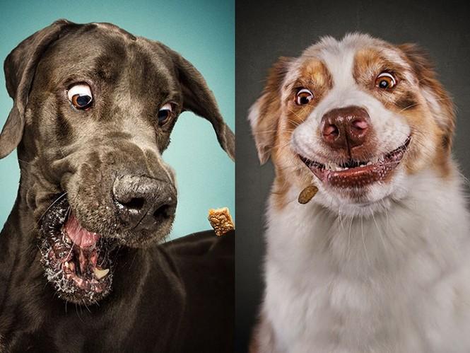 Ảnh đẹp của cún cưng - ảnh 3