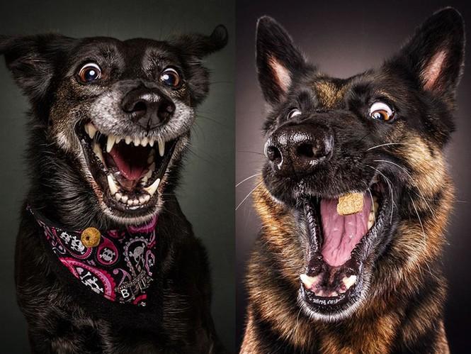 Ảnh đẹp của cún cưng - ảnh 4