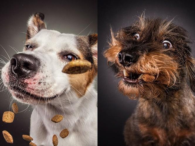 Ảnh đẹp của cún cưng - ảnh 5