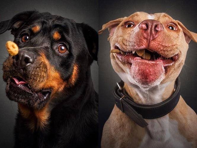 Ảnh đẹp của cún cưng - ảnh 7