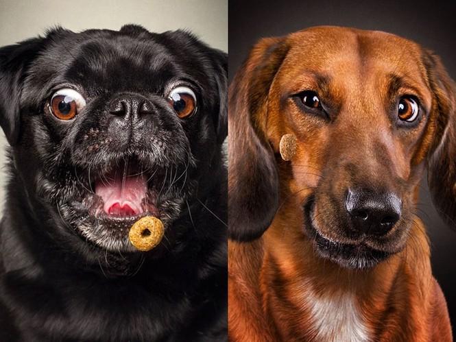 Ảnh đẹp của cún cưng - ảnh 8