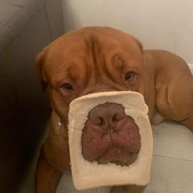 Ai bảo hóa trang cho thú cưng là khó lắm? Chỉ cần một miếng bánh mì là đủ! - ảnh 1