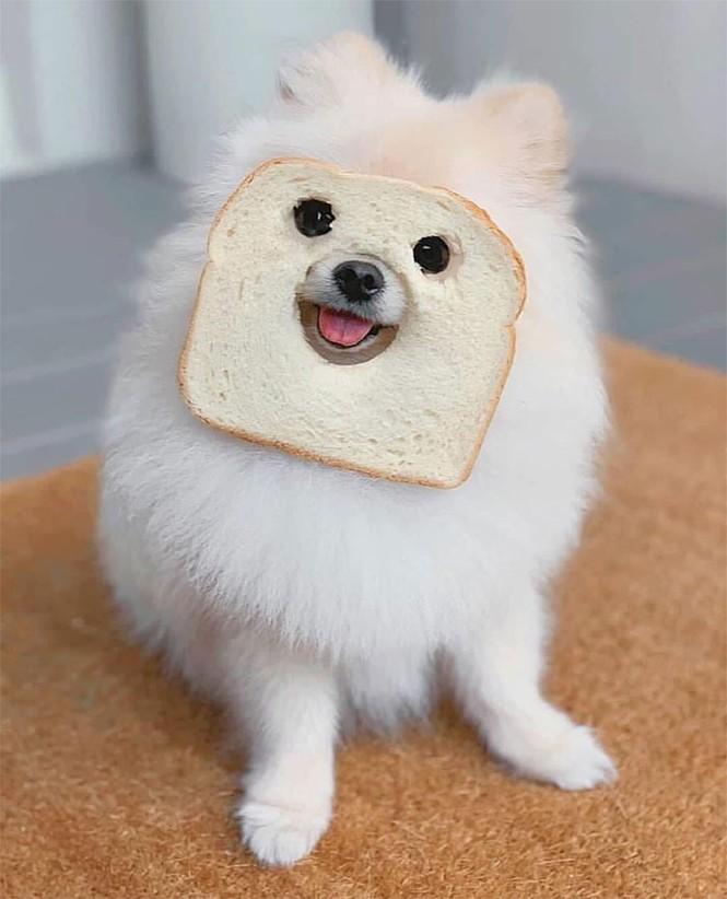 Ai bảo hóa trang cho thú cưng là khó lắm? Chỉ cần một miếng bánh mì là đủ! - ảnh 2