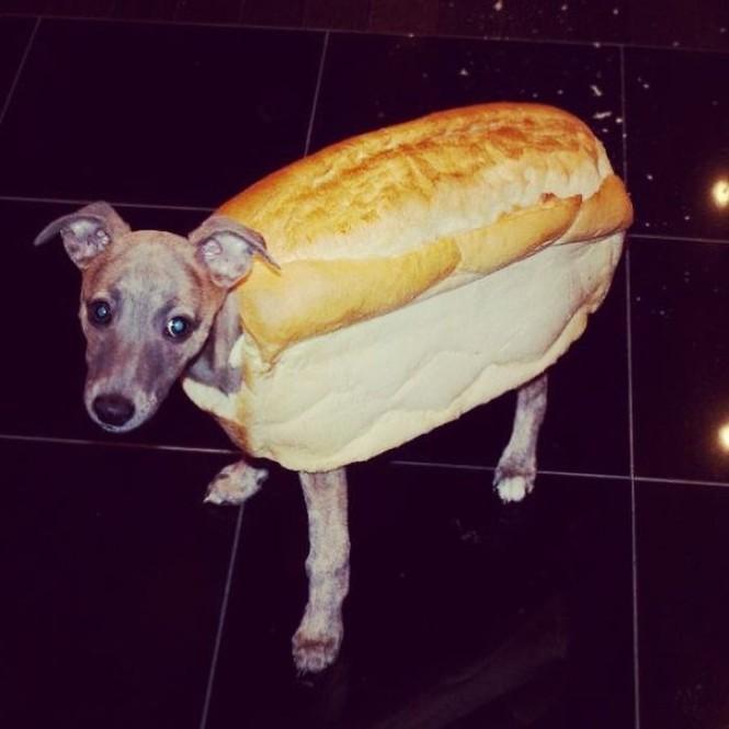 Ai bảo hóa trang cho thú cưng là khó lắm? Chỉ cần một miếng bánh mì là đủ! - ảnh 3