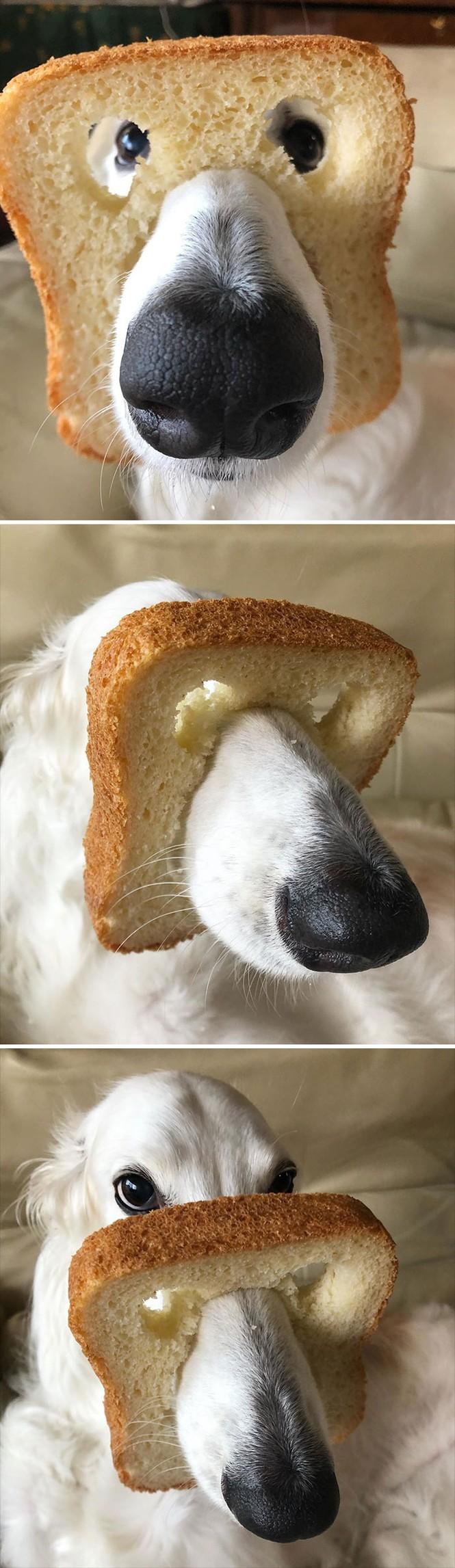 Ai bảo hóa trang cho thú cưng là khó lắm? Chỉ cần một miếng bánh mì là đủ! - ảnh 4