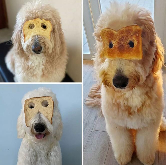 Ai bảo hóa trang cho thú cưng là khó lắm? Chỉ cần một miếng bánh mì là đủ! - ảnh 5