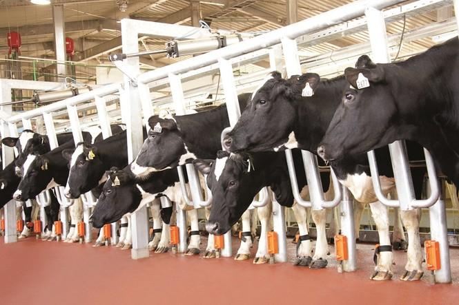 Việt Nam xuất khẩu lô sữa chính ngạch đầu tiên sang Trung Quốc - ảnh 2