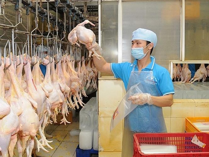 Cảnh báo doanh nghiệp tham gia, tiếp tay cho buôn lậu thịt lợn qua biên giới - ảnh 1