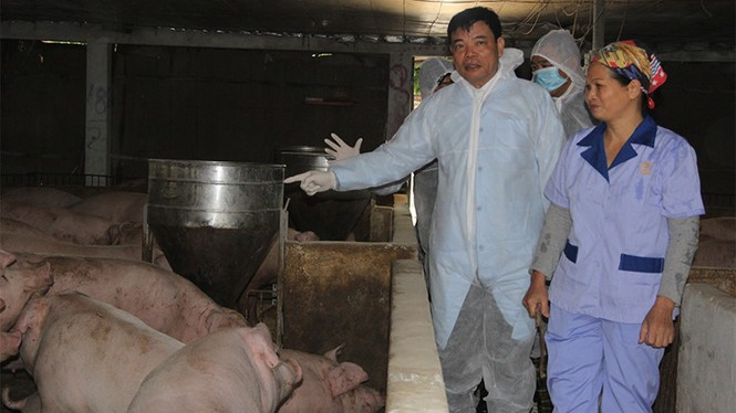 Nhiều tín hiệu tích cực về nguồn cung thịt lợn dịp Tết - ảnh 1