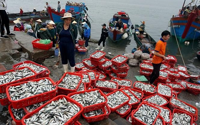 Đồng quản lý nghề cá giúp khai thác, bảo vệ nguồi lợi thuỷ sản bền vững - ảnh 1