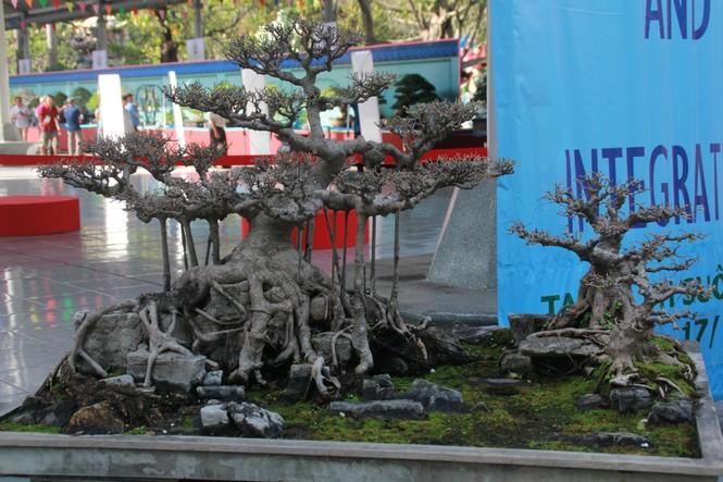 Chiêm ngưỡng các tác phẩm bonsai và đá cảnh nghệ thuật quốc tế hội tụ ở TPHCM - ảnh 17