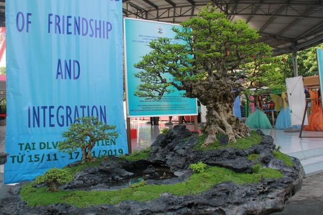 Chiêm ngưỡng các tác phẩm bonsai và đá cảnh nghệ thuật quốc tế hội tụ ở TPHCM - ảnh 18