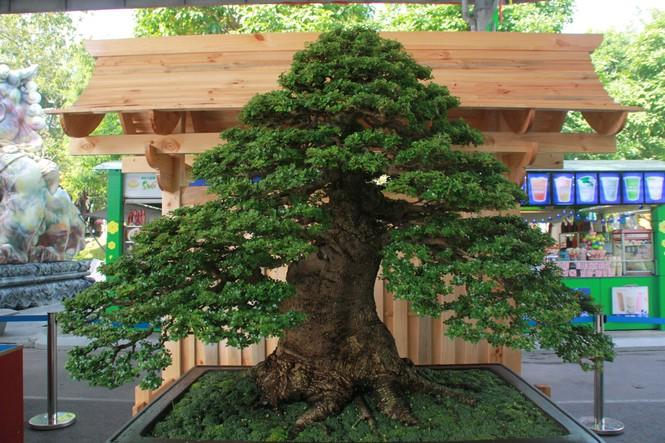 Chiêm ngưỡng các tác phẩm bonsai và đá cảnh nghệ thuật quốc tế hội tụ ở TPHCM - ảnh 3