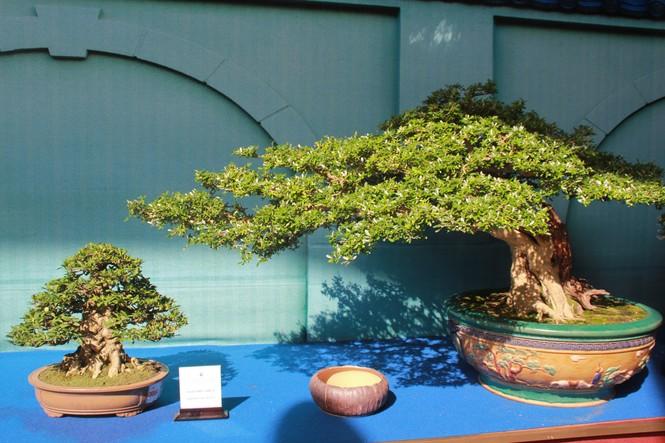 Chiêm ngưỡng các tác phẩm bonsai và đá cảnh nghệ thuật quốc tế hội tụ ở TPHCM - ảnh 2