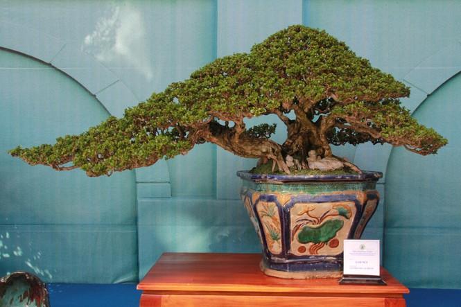 Chiêm ngưỡng các tác phẩm bonsai và đá cảnh nghệ thuật quốc tế hội tụ ở TPHCM - ảnh 5